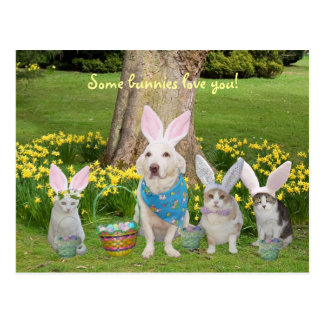 Bunny Dog with Bunny Cats Postcard
