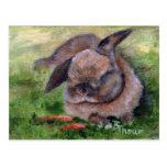 Bunny Dreams Postcard