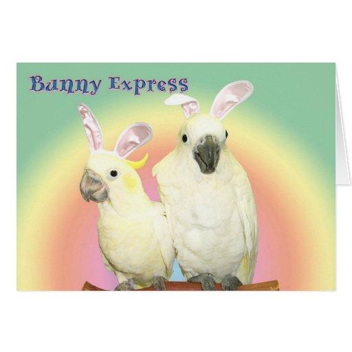 Bunny Express Greeting Card