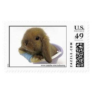 Bunny Eyed Stamp - Large