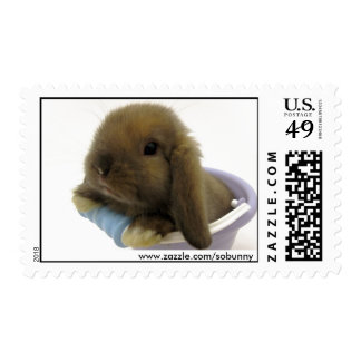 Bunny Eyed Stamp - Medium