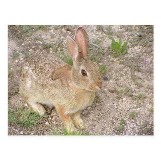 Bunny Fashion Model Postcard
