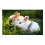 bunny friends post card