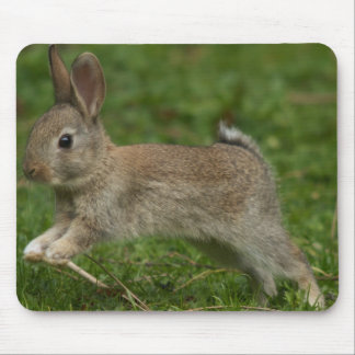 Bunny hop mouse pad