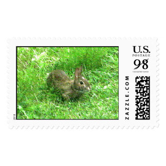 Bunny Hunny Actual Stamps* Postage