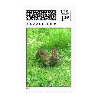 Bunny Hunny Actual Stamps* Stamps