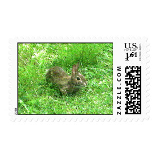 Bunny Hunny Actual Stamps* Postage Stamps