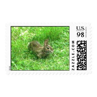 Bunny Hunny Actual Stamps* Stamp