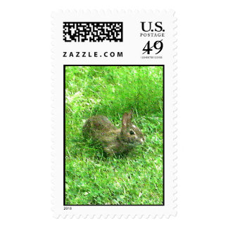 Bunny Hunny Actual Stamps* Postage Stamp