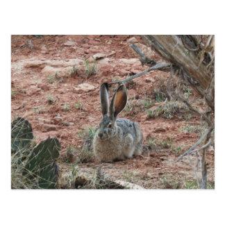 Bunny II Postcard