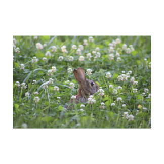 Bunny in Clover Canvas Prints