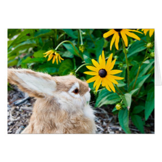 bunny in garden card
