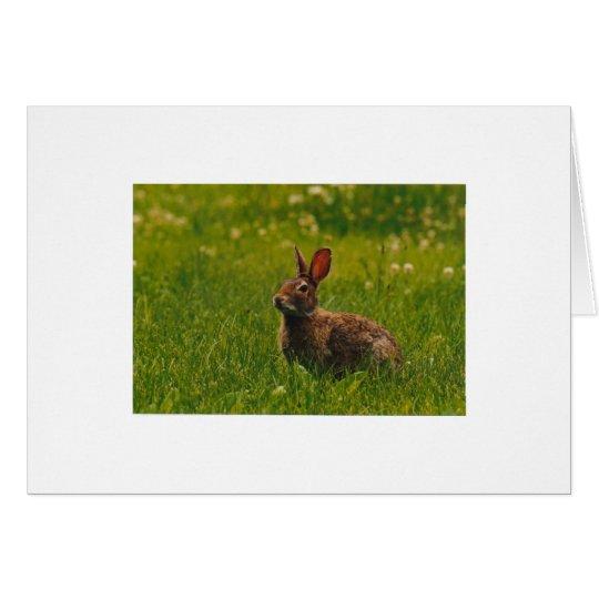 Bunny in Meadow Card