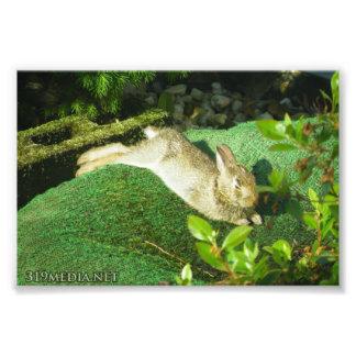 Bunny in Repose Photo Print