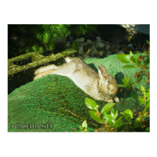 Bunny in Repose Postcard