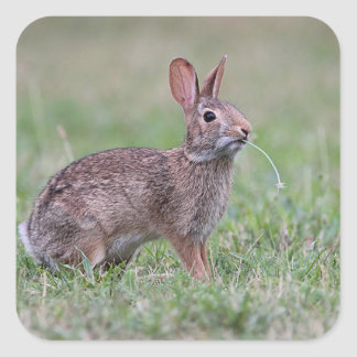 Bunny in the grass square sticker