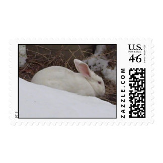 Bunny in the Snow Postage Stamp