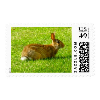 Bunny in the yard postage