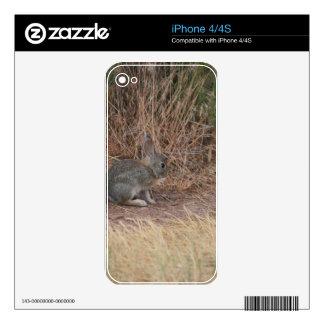 Bunny iPhone 4 Skins