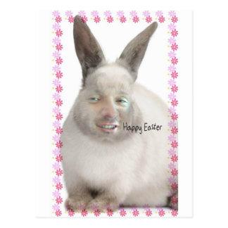 Bunny.jpg Postcard