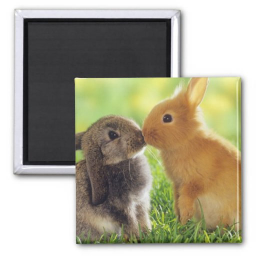 Bunny Kiss 2 Inch Square Magnet