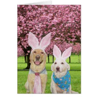 Bunny Labs Card