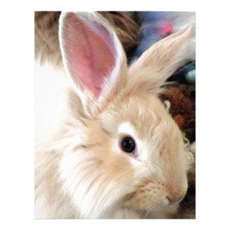 Bunny Love French Angora Rabbit Photograph Letterhead