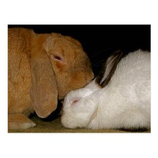 bunny love postcards