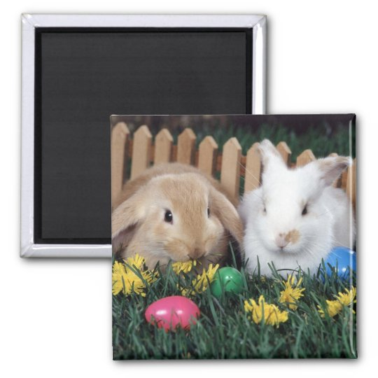 bunny magnet 2
