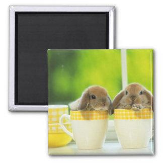 bunny magnet 5