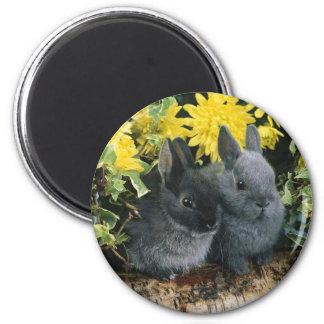 bunny magnet 6