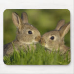 bunny mouse pad 1