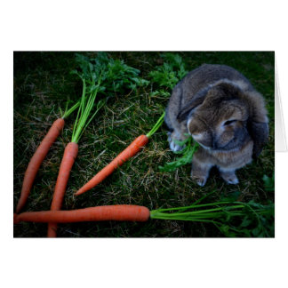 Bunny Munches Carrots / Notecard