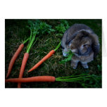Bunny Munches Carrots / Notecard Cards