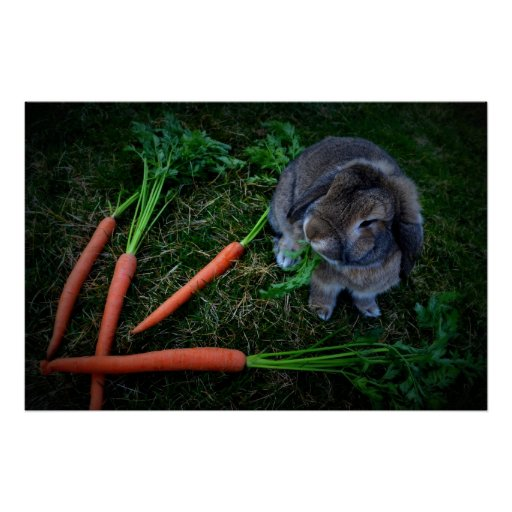 Bunny Munches Carrots / Poster Artist Print