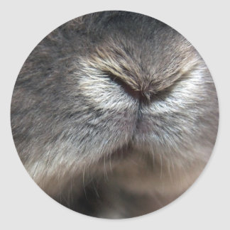 Bunny nose (sticker) classic round sticker