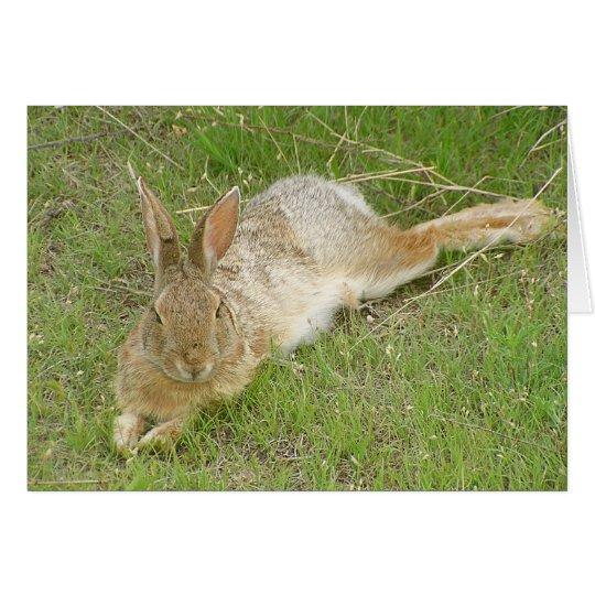Bunny On Break Card