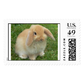 bunny postage stamps