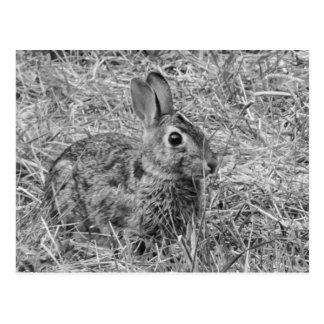 Bunny! Postcards