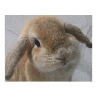 Bunny Post Card