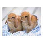 bunny postcard 13