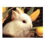 bunny postcard 9