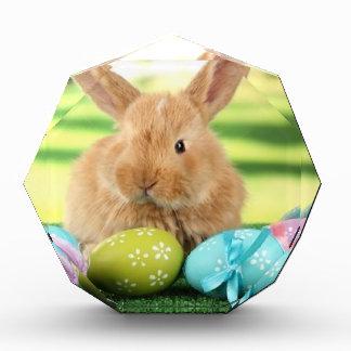 Bunny Rabbit Award
