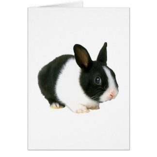 Bunny Rabbit Black & White Card