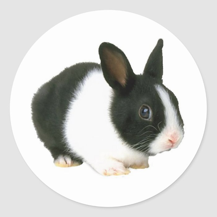 Bunny Rabbit Black & White Classic Round Sticker