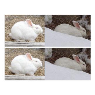 Bunny Rabbit Bookmarks Postcard