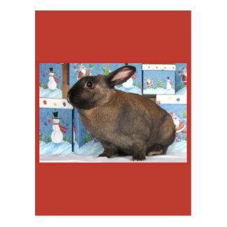 Bunny Rabbit Chritmas with Snowman Holiday Boxes Postcard