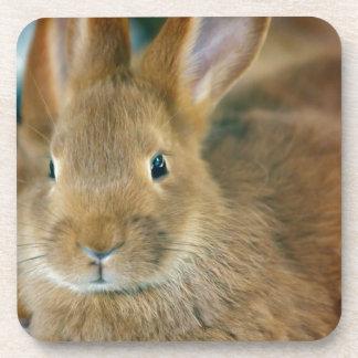 Bunny Rabbit Coasters