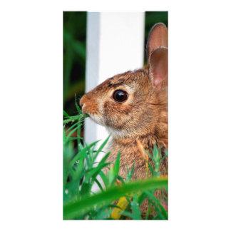 Bunny Rabbit Custom Photo Card