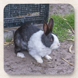Bunny rabbit hard plastic coasters